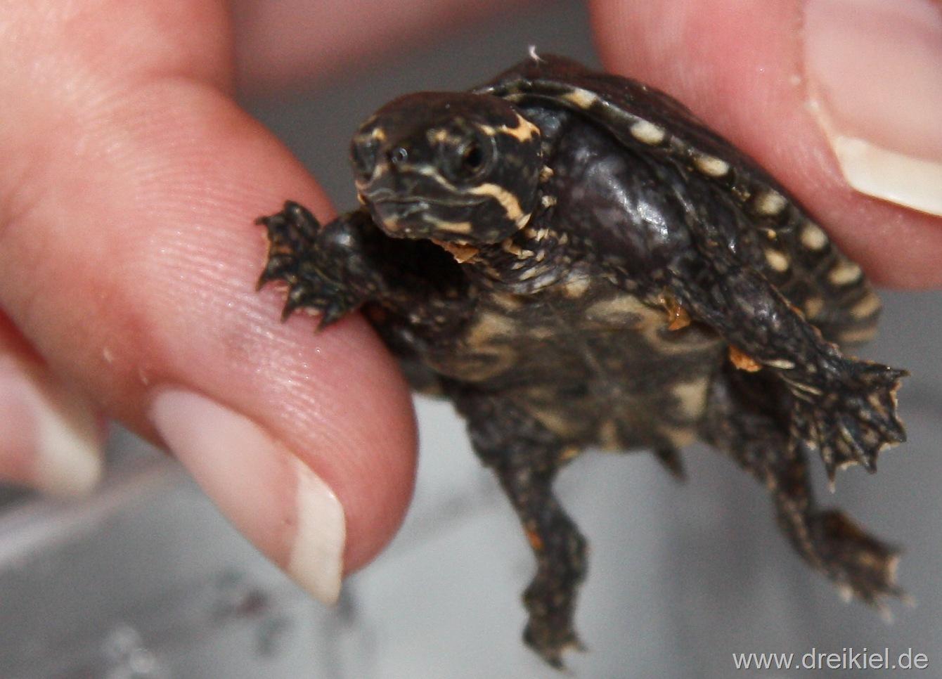 Kleiner Kühlschrank Für Schildkröten : Kleiner kerl u2026. « blueturtles